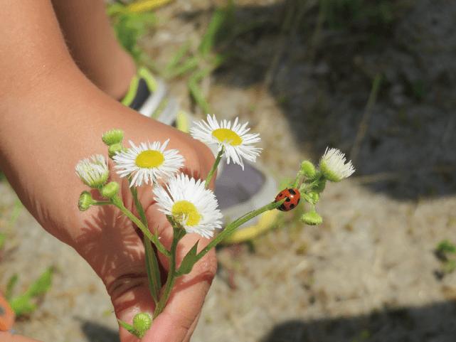 すくすくゆめの郷こども園の保育:のびのび保育
